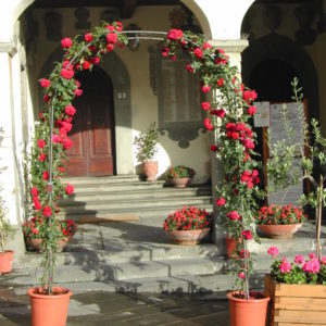 Arches and espaliers for climbing plants